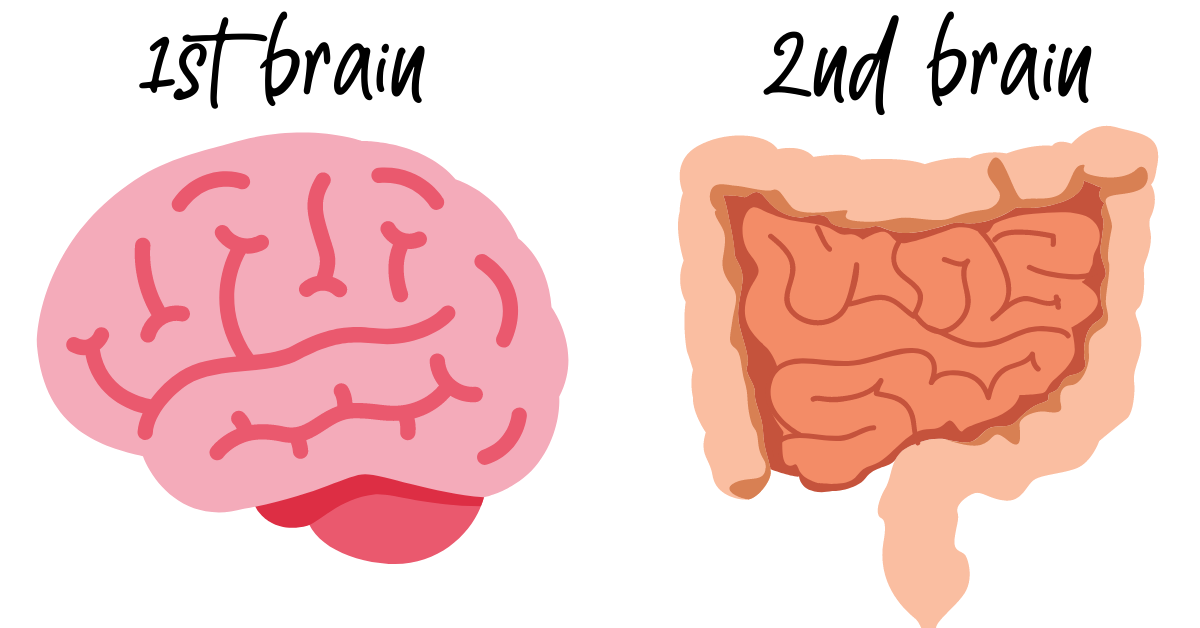 gut and brain image